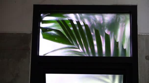 Trópusi Pálma levél inog szoba ablakon videóinak 4k
