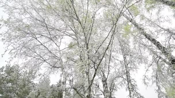 Zelené listy stromů a trávy pokryté sněhem po změny počasí