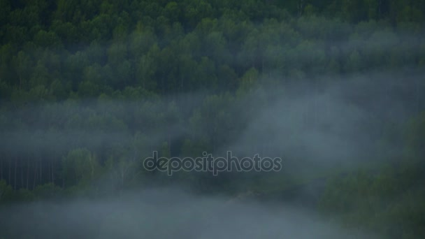 Singing birds at dawn  Mountain landscape and pine forest