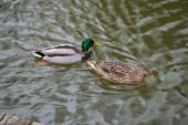 Fotografie Straubing - März 2020: Der Teich im Stadtpark in Bayern