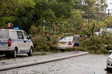 Miranda,Australia 2020-01-20 People surveying a tree fallen on cars due to severe hailstorm. Ambulance and Police attending the scene on Kiora Rd, Miranda.
