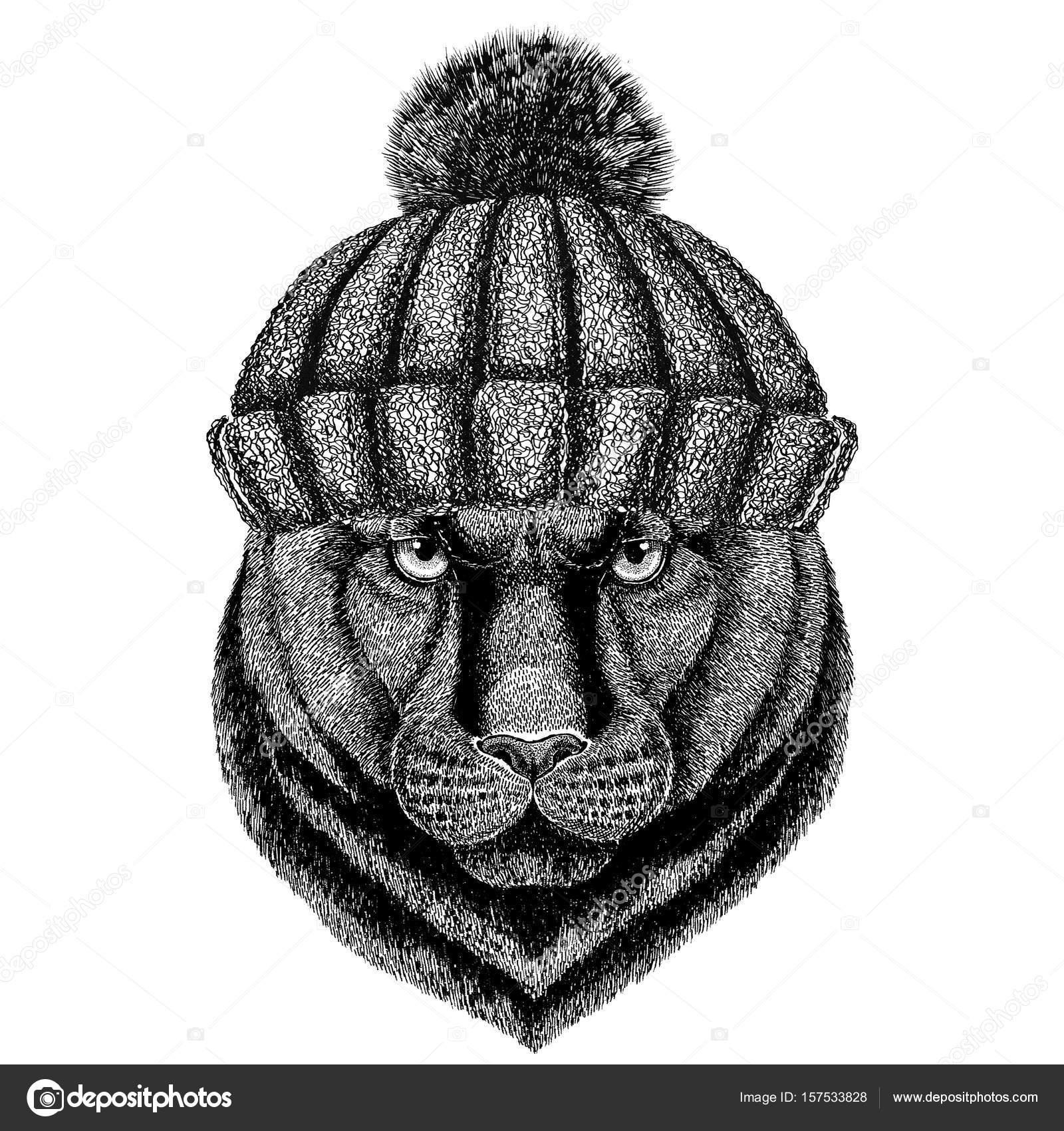 Chat Cougar de Puma sauvage de panthère portant bonnet hiver– images de  stock libres de droits 14dbadbdee8