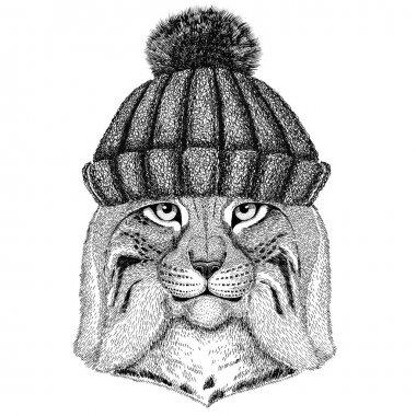 Wild cat Lynx Bobcat Trot wearing winter knitted hat