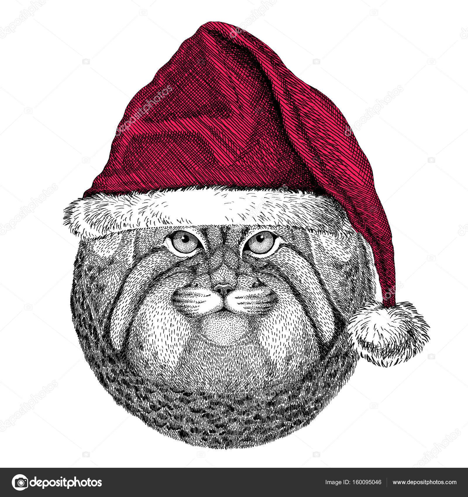 野生の猫マヌルネコ クリスマス イラスト野生動物クリスマスを着てサンタ