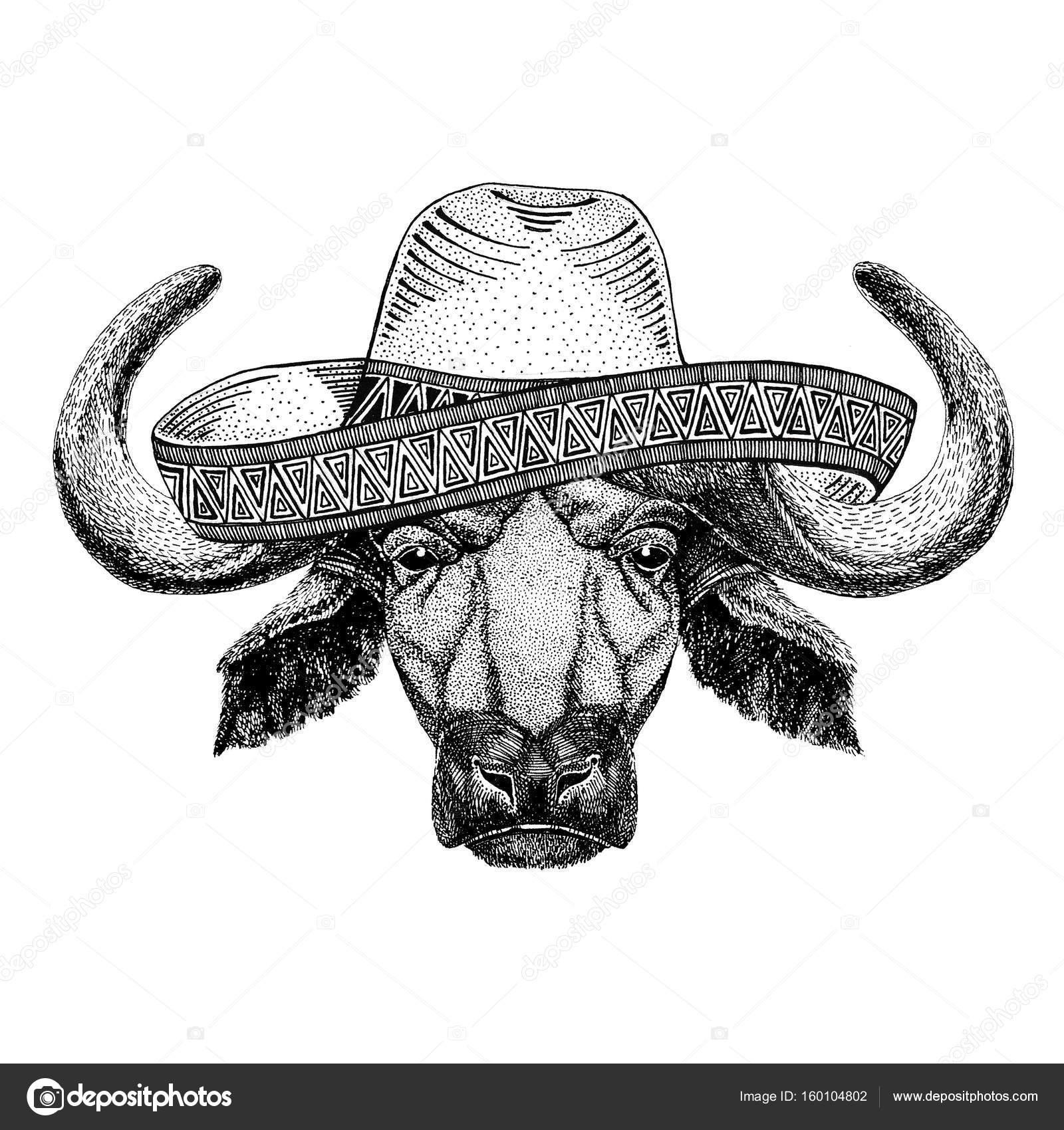 Buey en mexico   Búfalo, Toro, buey los animales salvajes con ...