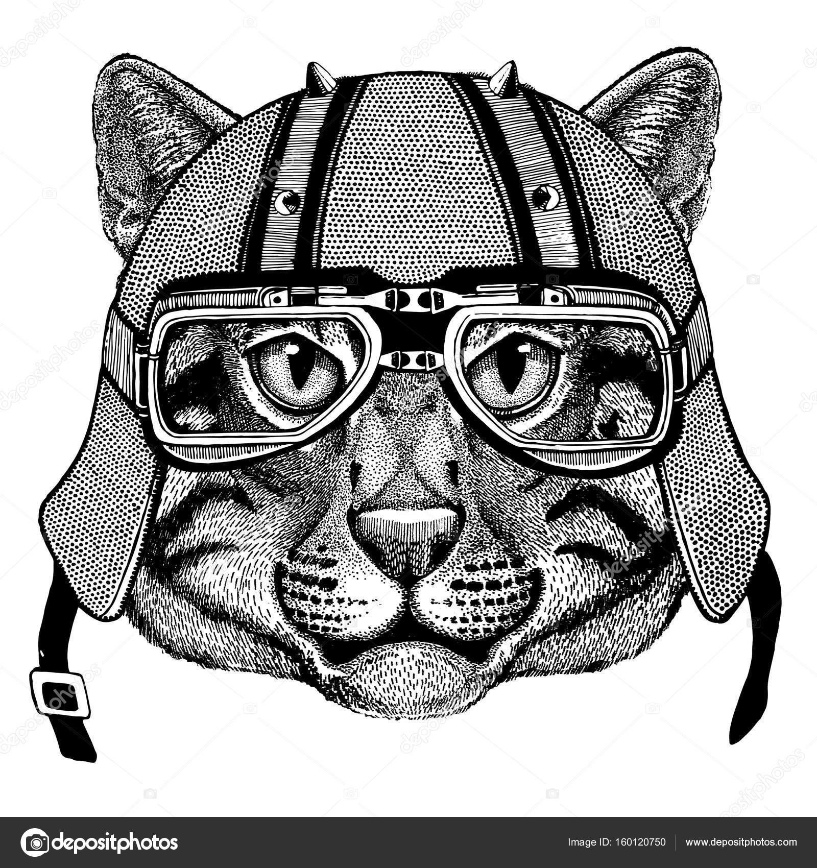 Chat Chat Sauvage Port Casque Motard Animal Avec Casque De Moto En