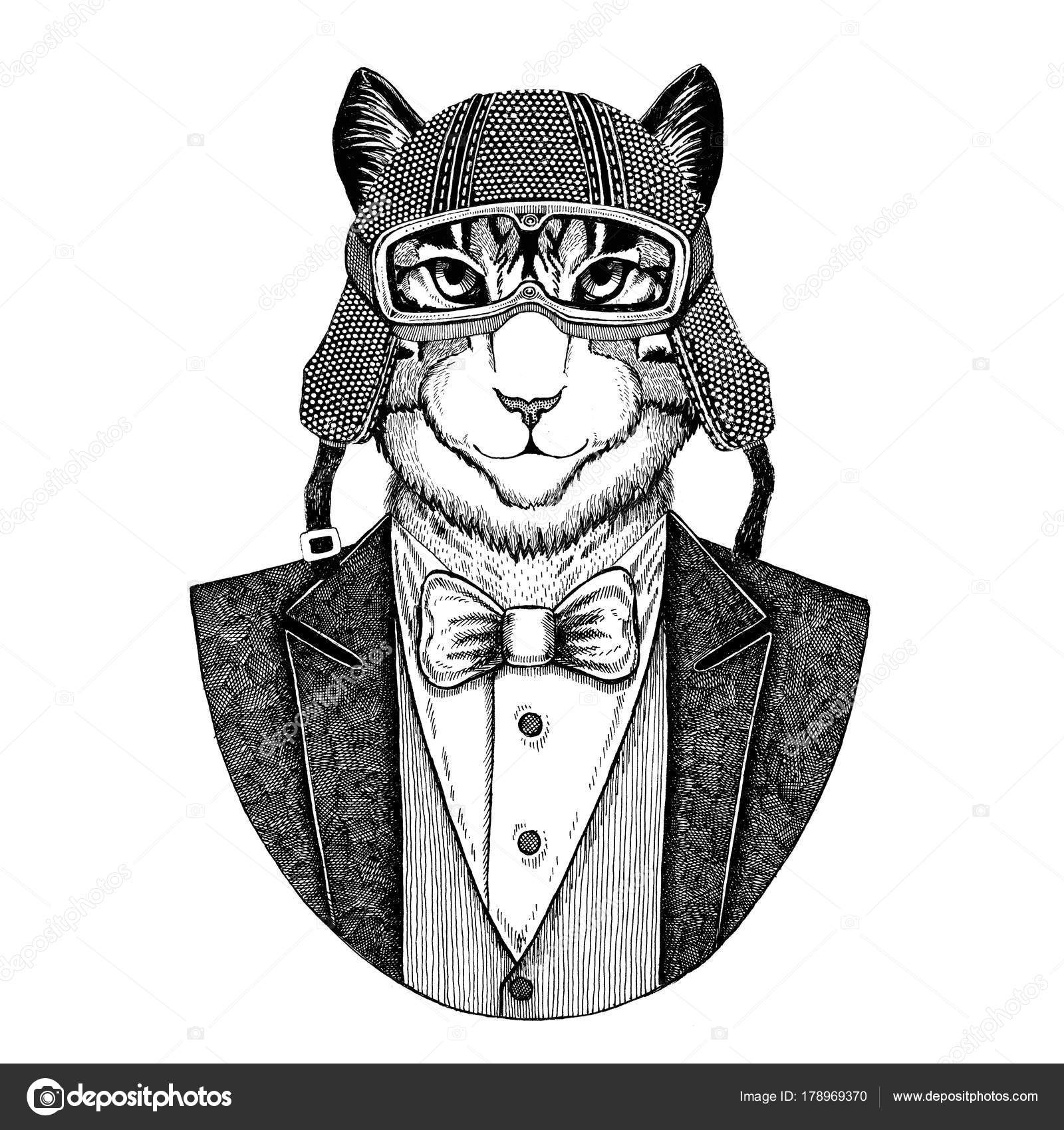408df06dc Image of domestic cat Animal wearing jacket with bow-tie and biker helmet  or aviatior · Image of domestic cat Hand drawn illustration for tattoo ...