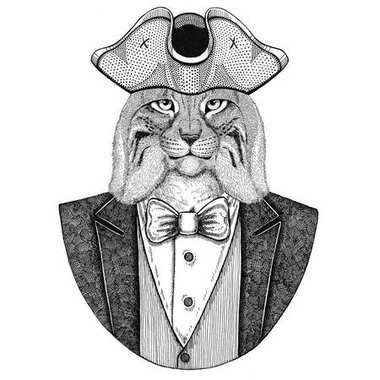 Wild cat, Lynx, Bobcat, Trot Animal wearing cocked hat, tricorn Hand drawn image for tattoo, t-shirt, emblem, badge, logo, patches