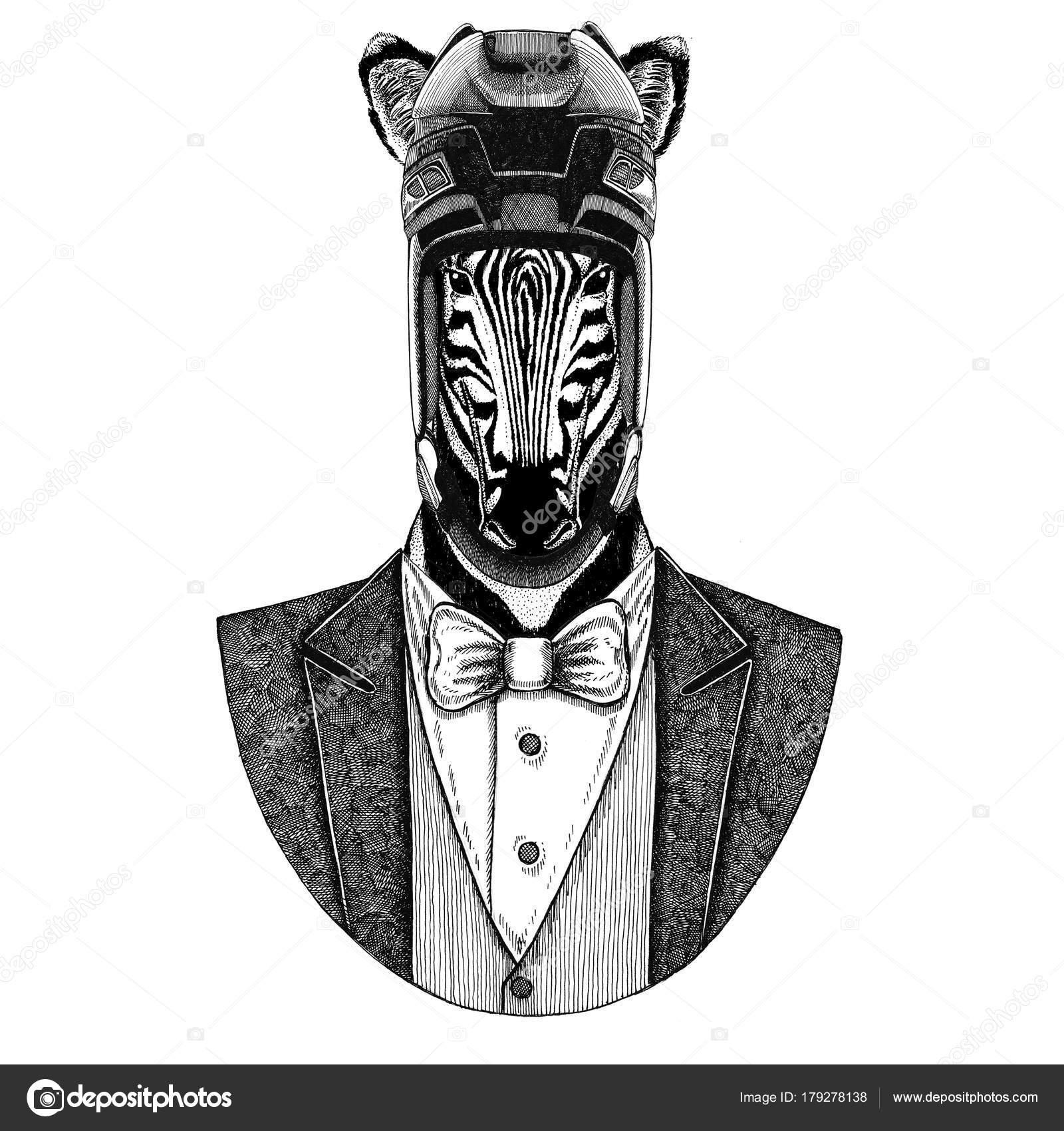 aeac70cba Animal wearing jacket with bow-tie and hockey helmet or aviatior helmet.  Elegant hockey player. Image for tattoo