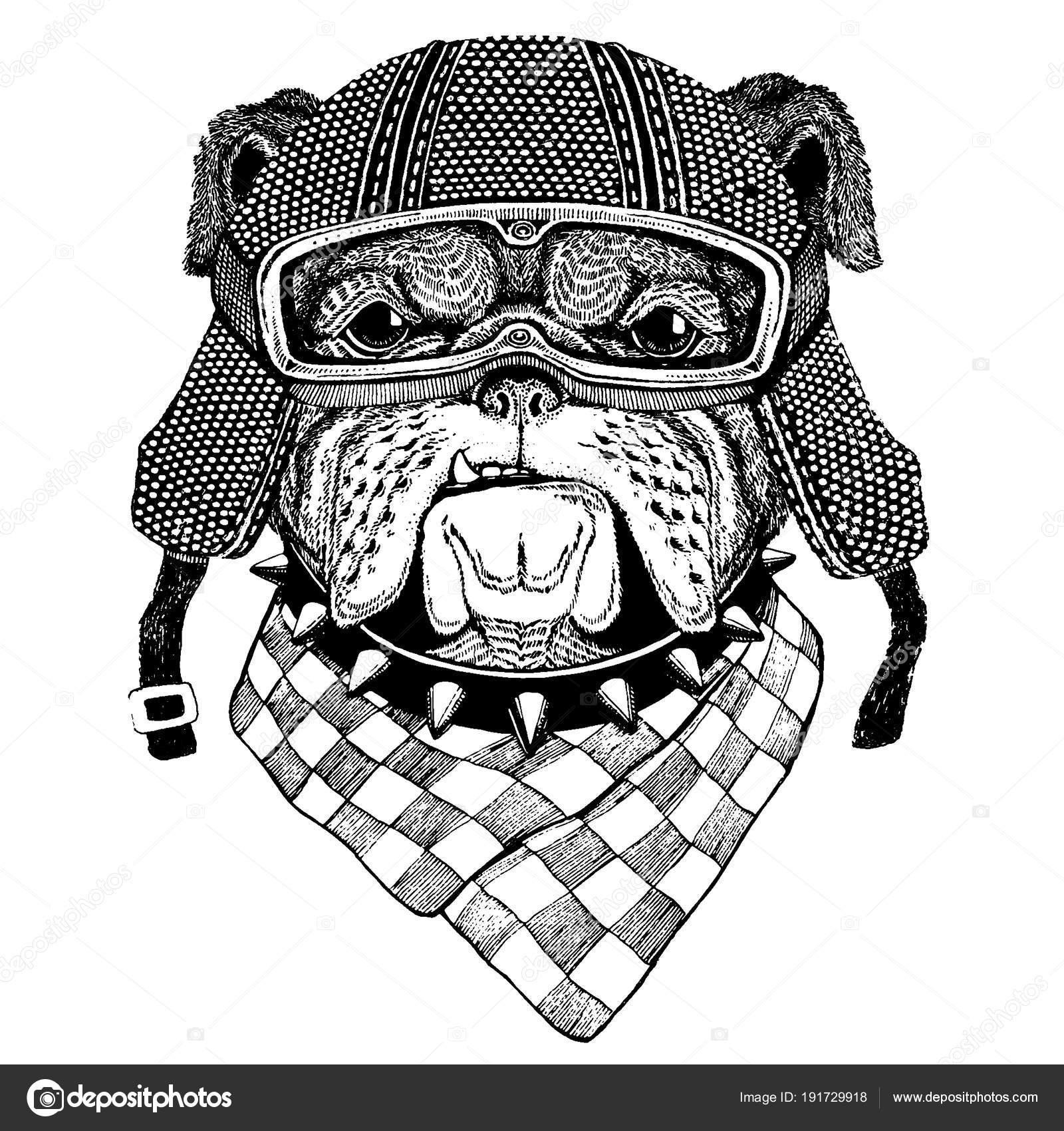 Perro Bulldog, con casco de la motocicleta. Tocado Vintage motos ...