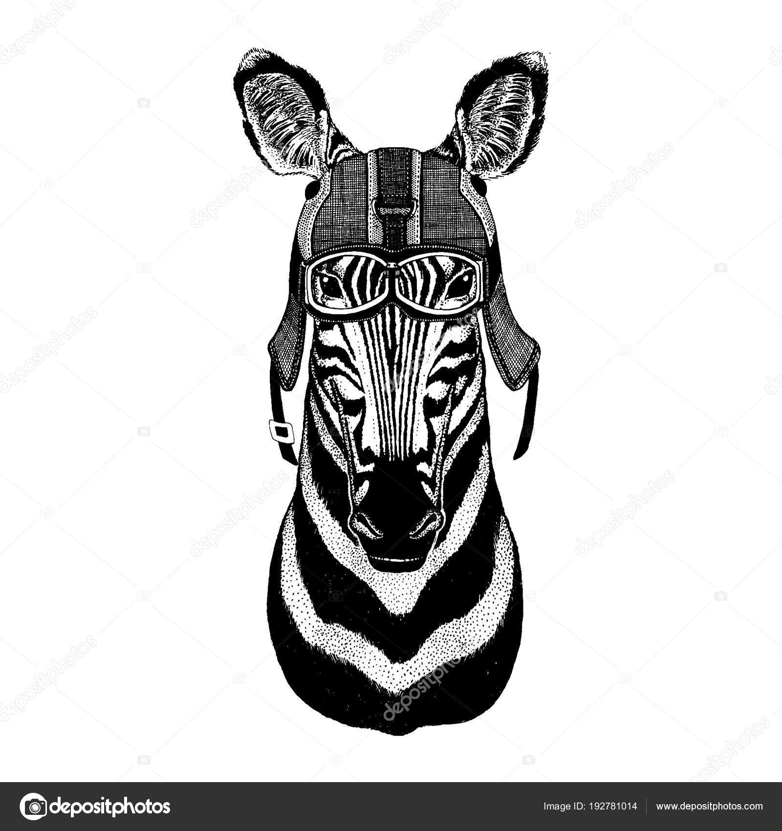on sale 4f564 1dceb Zebra, cavallo casco da motorycle portare animali Hipster ...