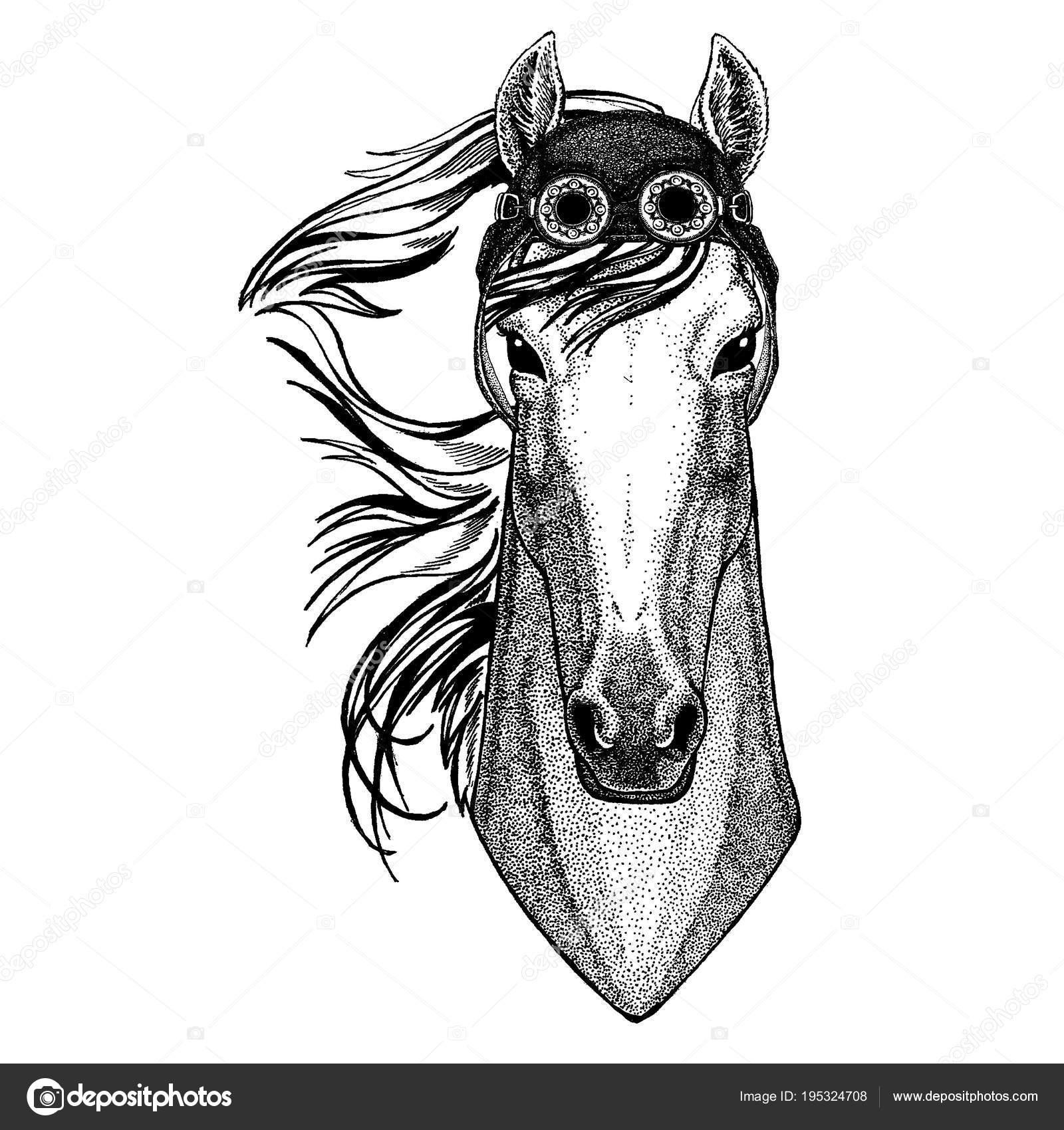 Animal lindo usa motocicleta, casco de aviador caballo, hoss ...