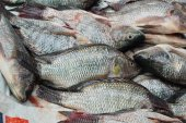 pesce fresco del mercato.
