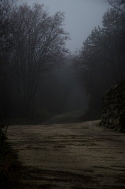 trees along mysterious foggy route