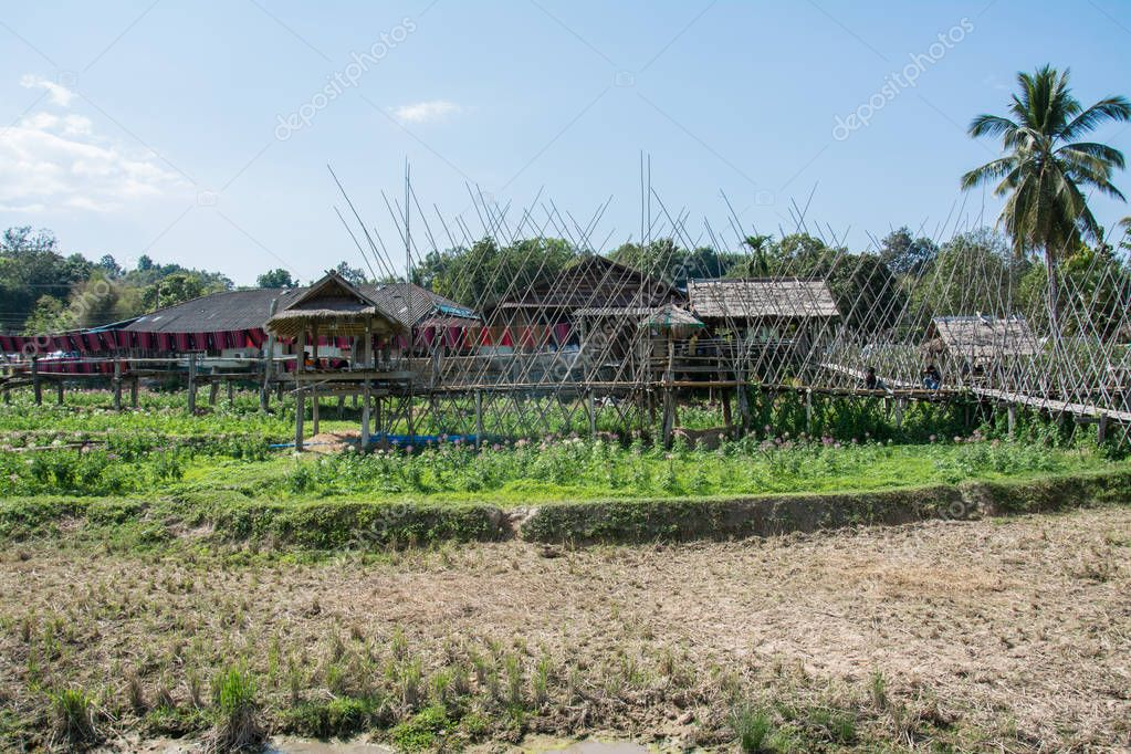 Cottage and wooden walkways in rice field at Sila Laeng, Pua Dis