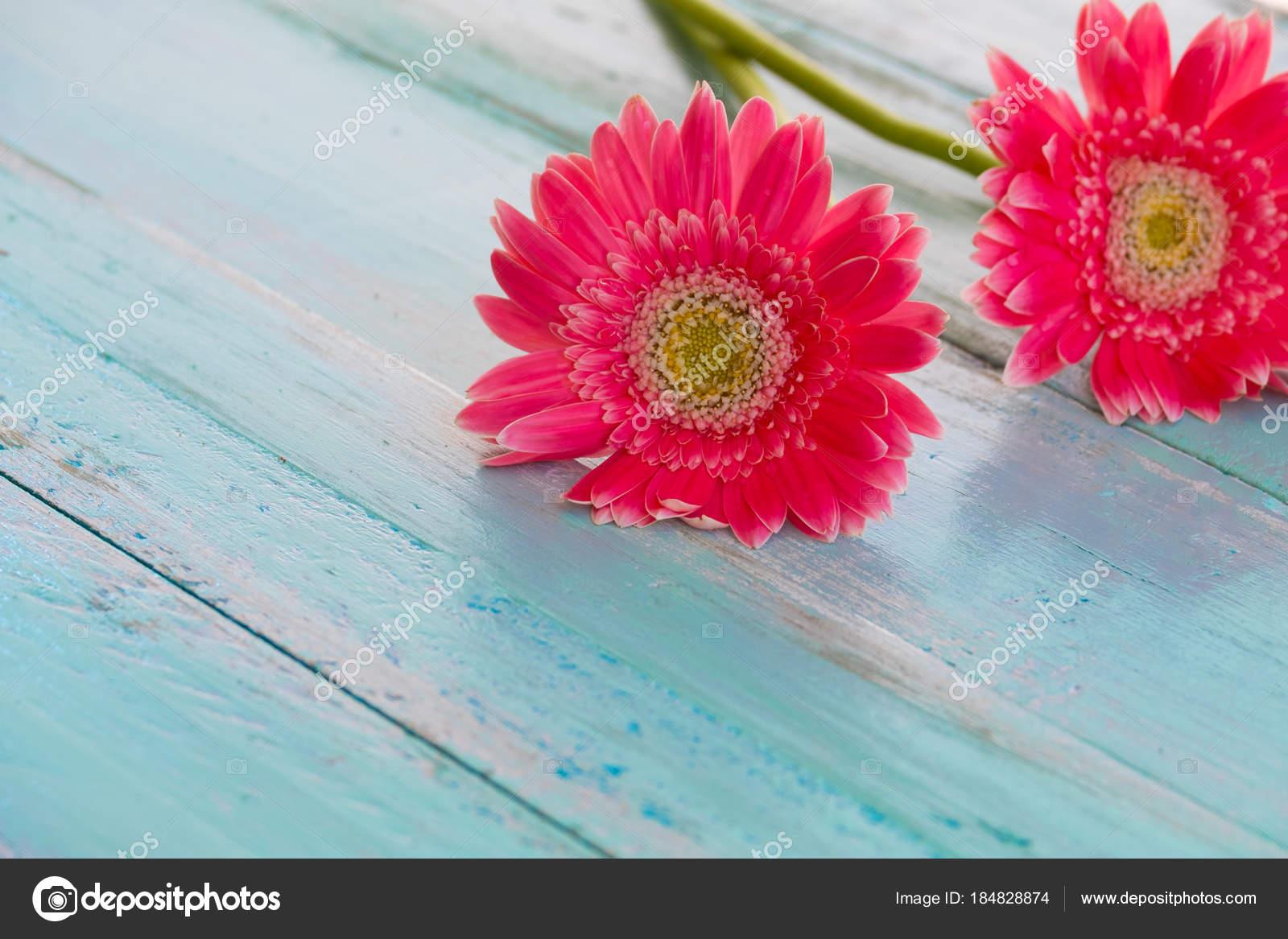 Pink Flowers Vintage Wooden Blue Paint Background Vintage Pastel ...