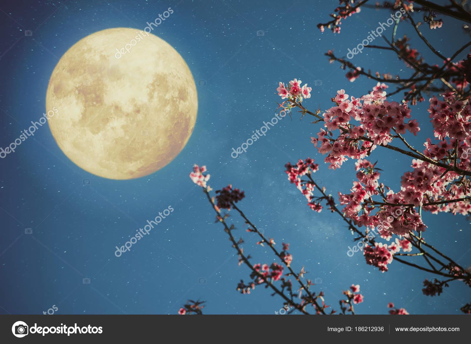 Romantic night scene beautiful cherry blossom sakura flowers night romantic night scene beautiful cherry blossom sakura flowers night skies stock photo izmirmasajfo