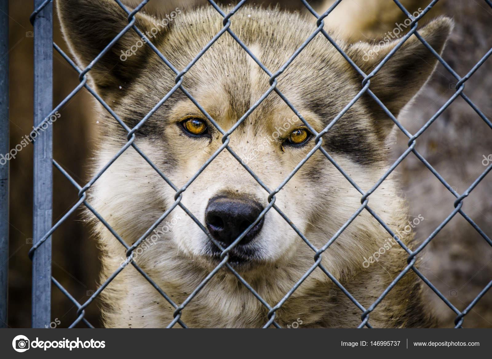 Wolf und Wolf Hunde im Winter — Stockfoto © TeriVirbickis #146995737