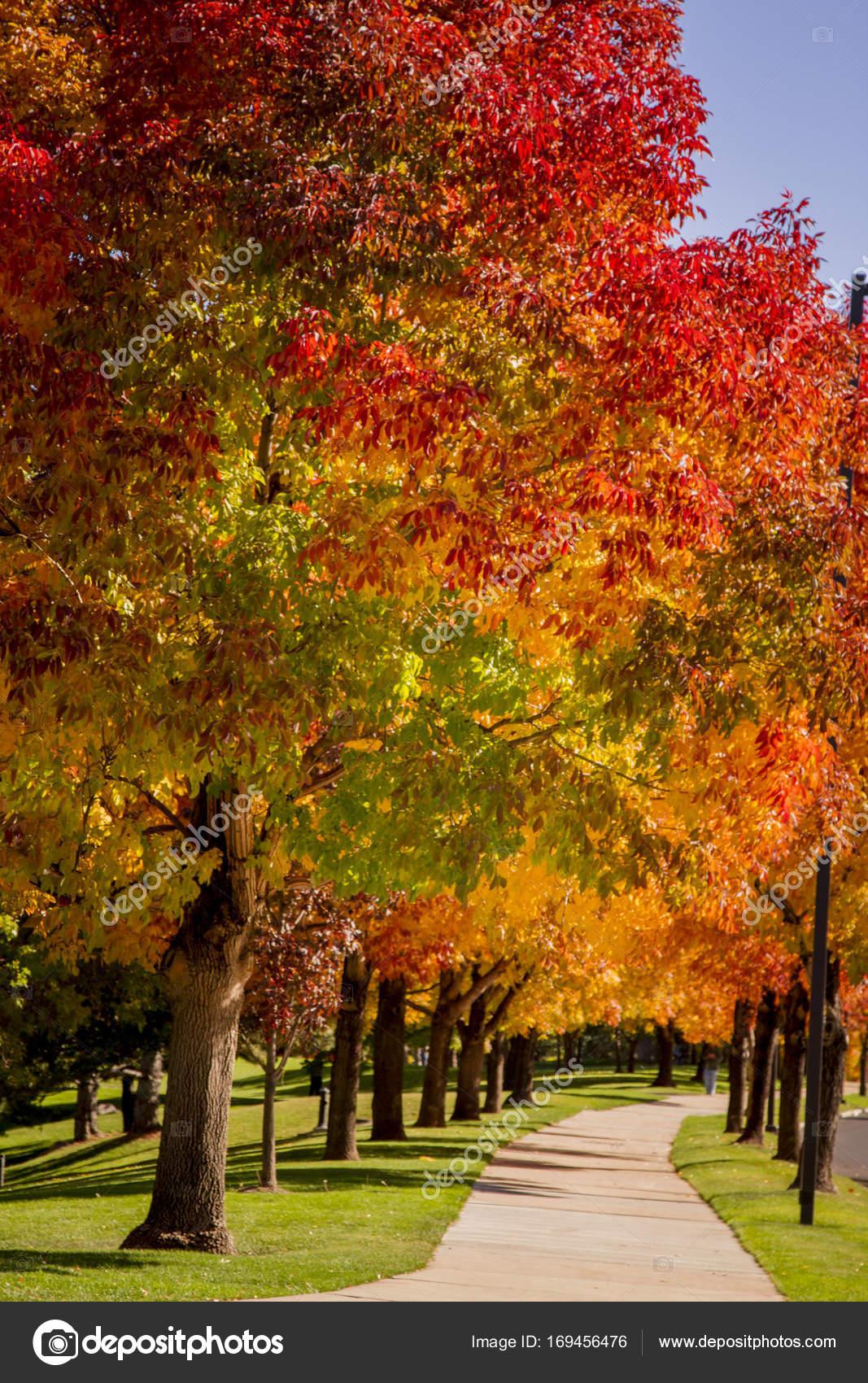 Colores de otoño en Denver Colorado Tech Center — Foto de stock ...