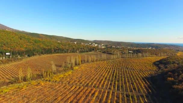 Flight dron nad vinohrady
