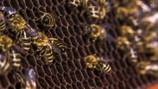 Včely práce na prázdný plástve