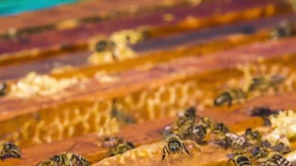 Mnoho včel jsou zaneprázdněni v podregistru