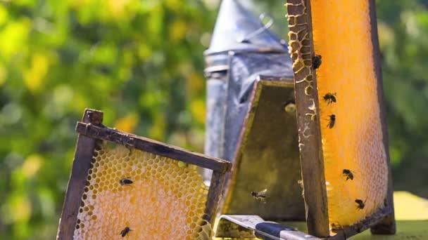 Včely na medových plástech s medem
