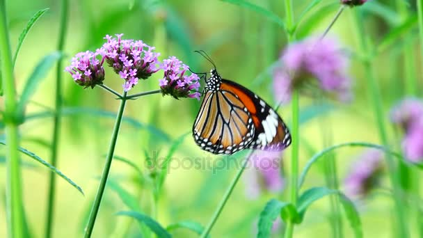 4 k Thai pillangók, virágok legelő