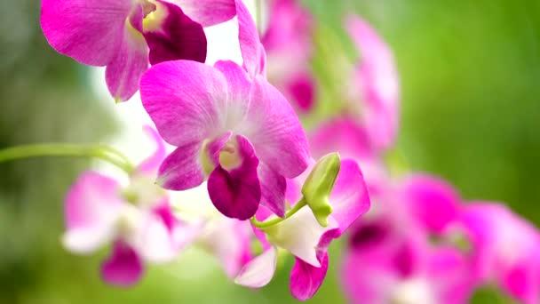 krásné 4 k thajské orchideje