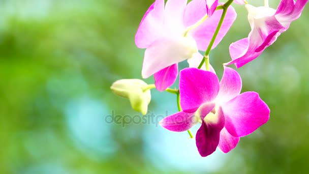 4k thailändische Orchideen schön