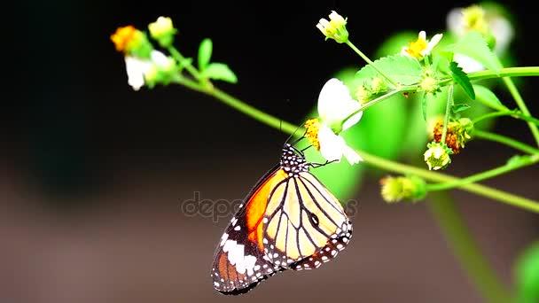 HD super lassú Thai gyönyörű pillangó rét virágok jellegű kültéri