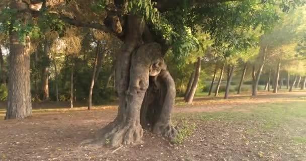 nagy fa szélén az erdő naplemente fény