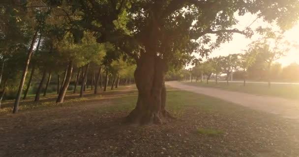 ösvény fák őszi séta