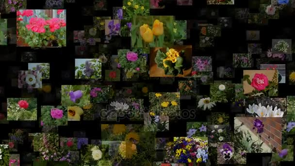 Photo stream of flowers moving IN, seamless loop