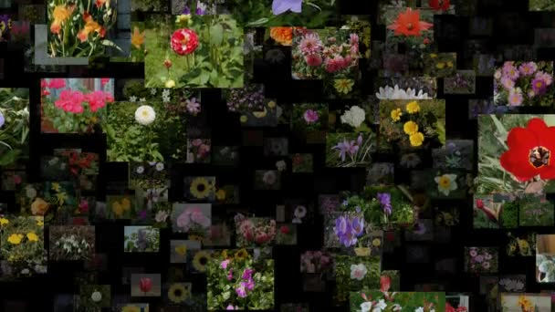 Photo stream of flowers moving UP, seamless loop