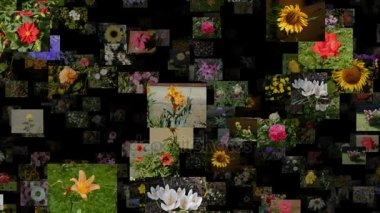 Photo stream of flowers moving RIGHT, seamless loop