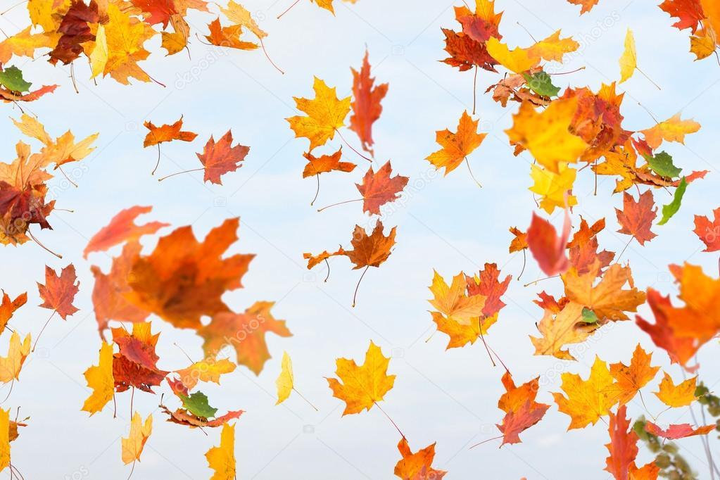 La ca da de hojas de oto o fotos de stock natalimis - Descargar autumn leaves ...