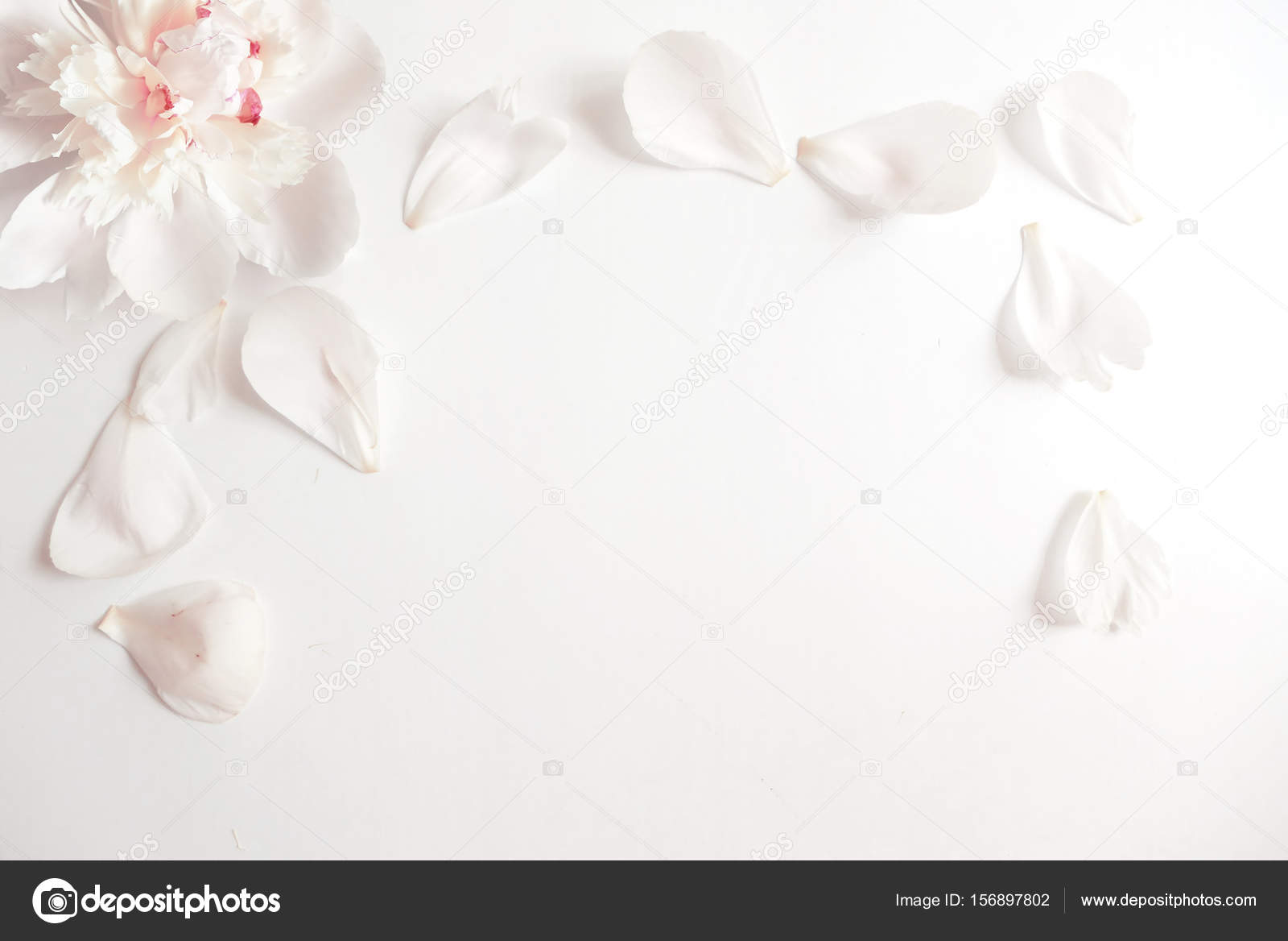 Wedding styled stock photography with peony flower head and petals empty space for your text beautiful blank card or birthday invitation photo by tabitazn stopboris Image collections