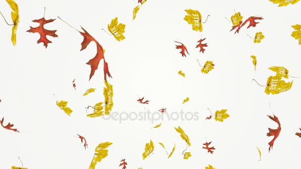 Flying colorful red oak and yellow maple leaves with sale writing. Autumn, fall business concept. Isolated elements on white background. Slow motion, close-up HD realistic 3D animation.