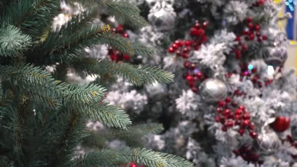 Fenyő fa díszített karácsonyfa ellen