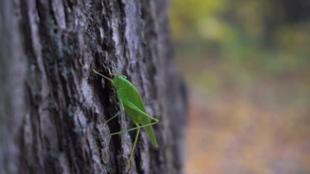Green Grasshopper Sitting on a Tree