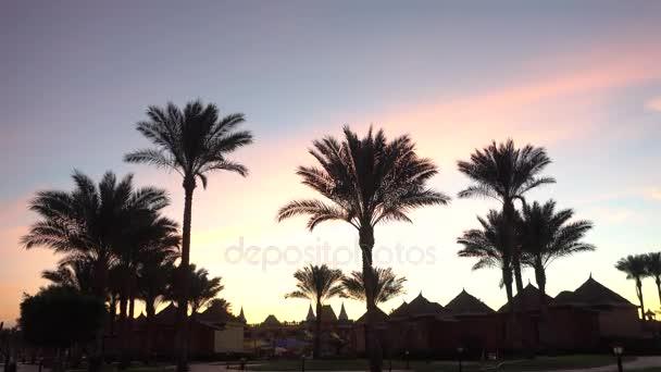 Silueta palem v západu slunce pozadí