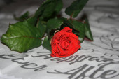 a red rose on the bedclothes