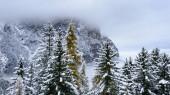 Nebelbedecktes Alpental, abends von schneebedeckten Bäumen umgeben in Südtirol, Italien