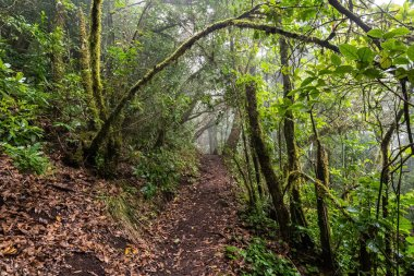 Path into a mossy, humid forest