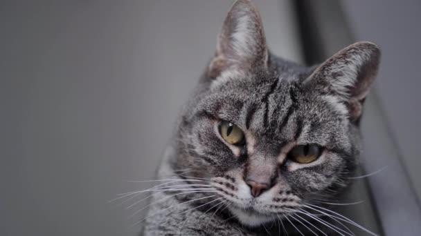 Krásná kočka s dlouhým knírem