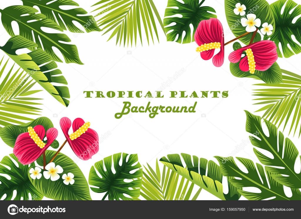Scorpion333 159057950 - Marcos para plantas ...