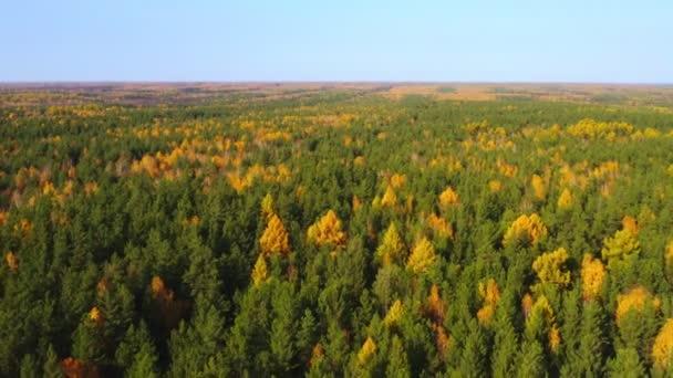 Smíšený les na Sibiři a modré nebe na podzim.