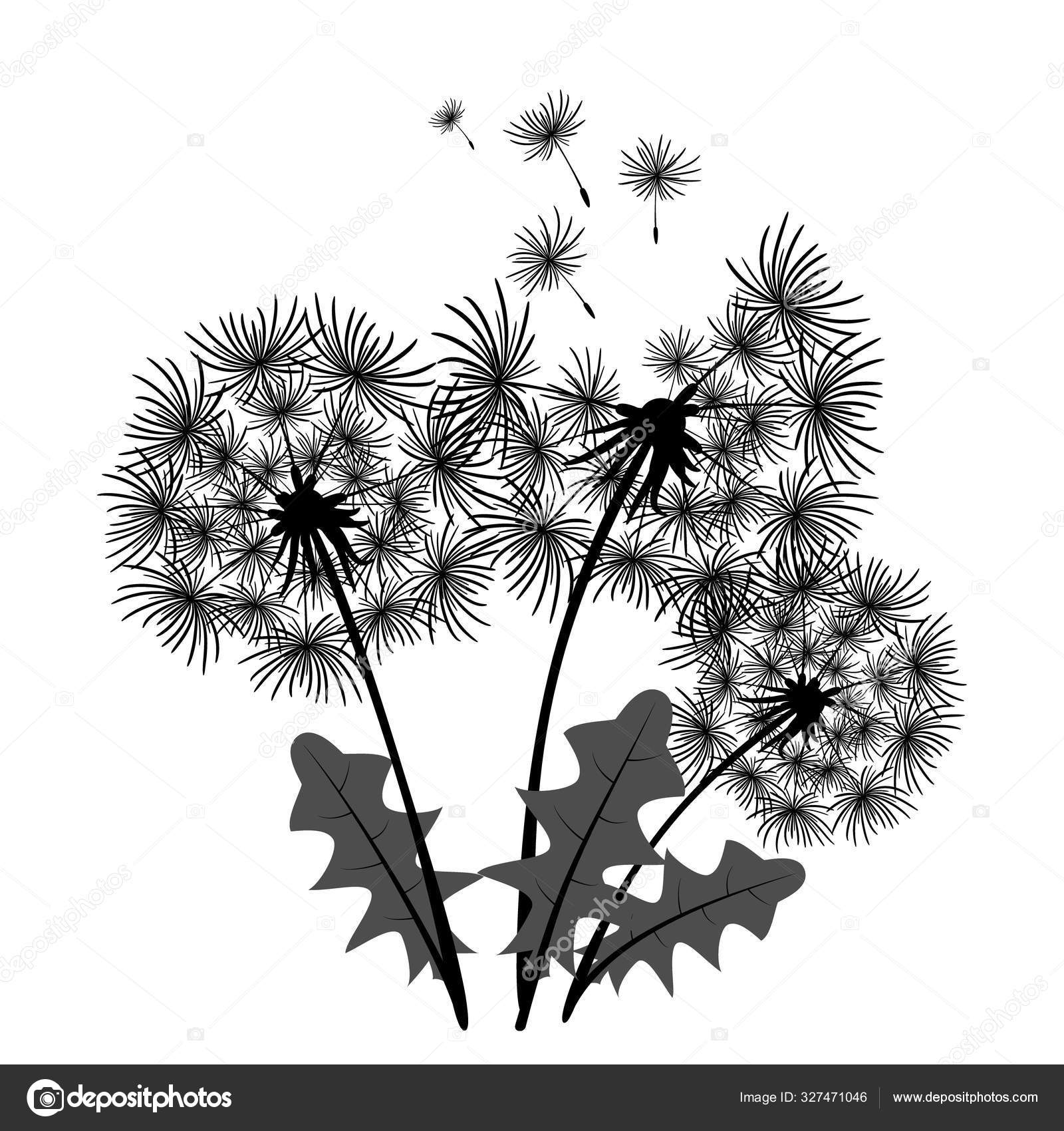 Bouquet Of Three Dandelion Flowers Black White Illustration Floral Clipart For Design Clothes Fashion Element Allegory Black Drawing Isolated On White Background Home Decor Stock Vector C Gutzol Ukr Net 327471046