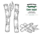 Cane sugar vector illustration. Hand drawn medicinal plants and